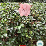 Captura Pokémon GO cazando pokémon