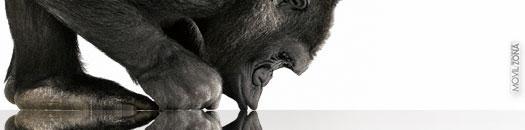 iPhone 5 y Gorilla Glass