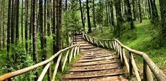 Bosque de verde