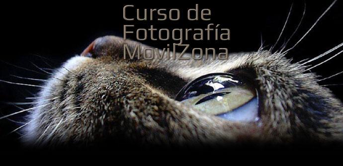 Cara de un gato