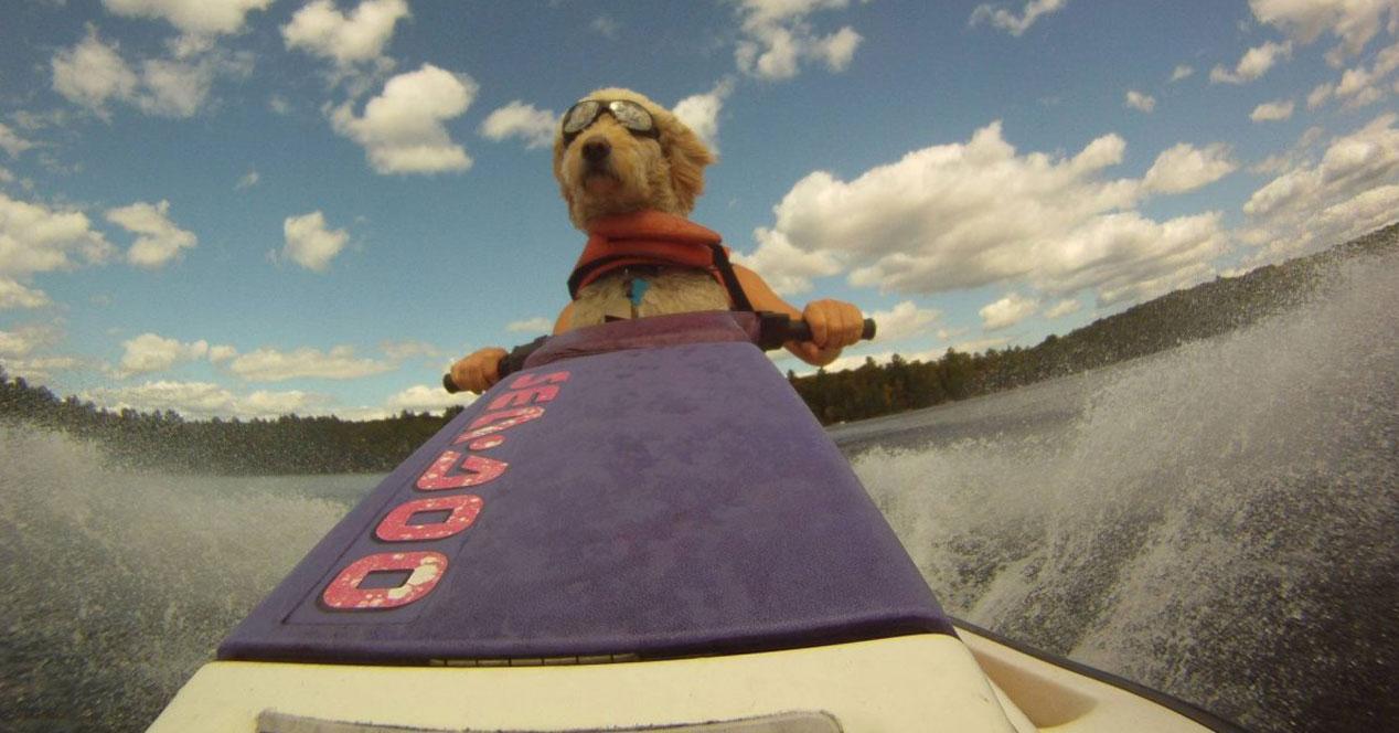 perro en moto de agua