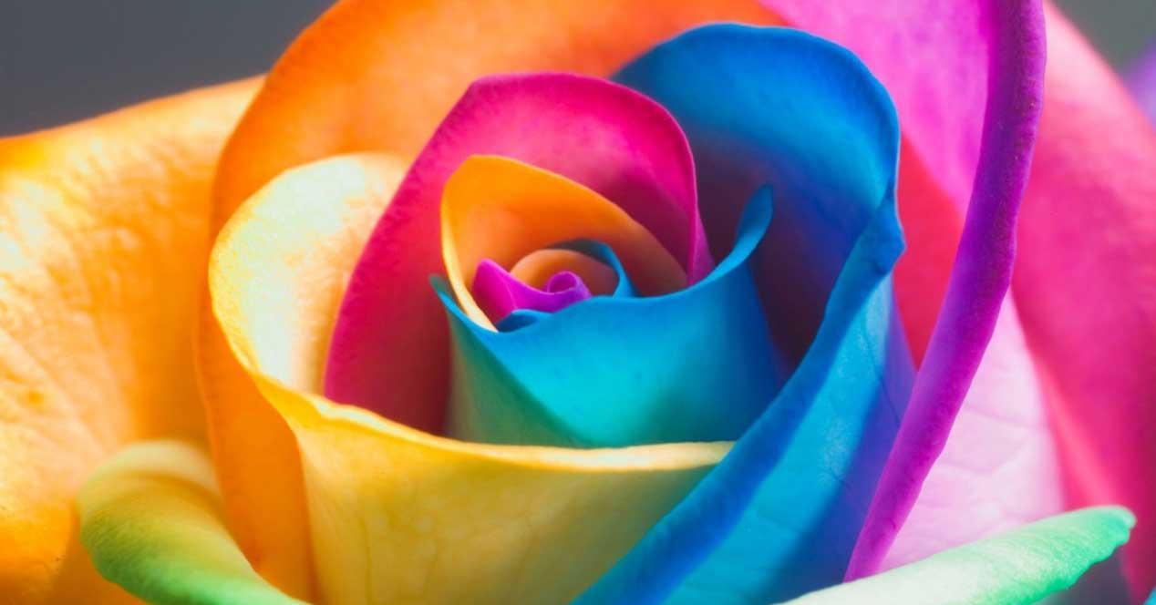 Colores flor