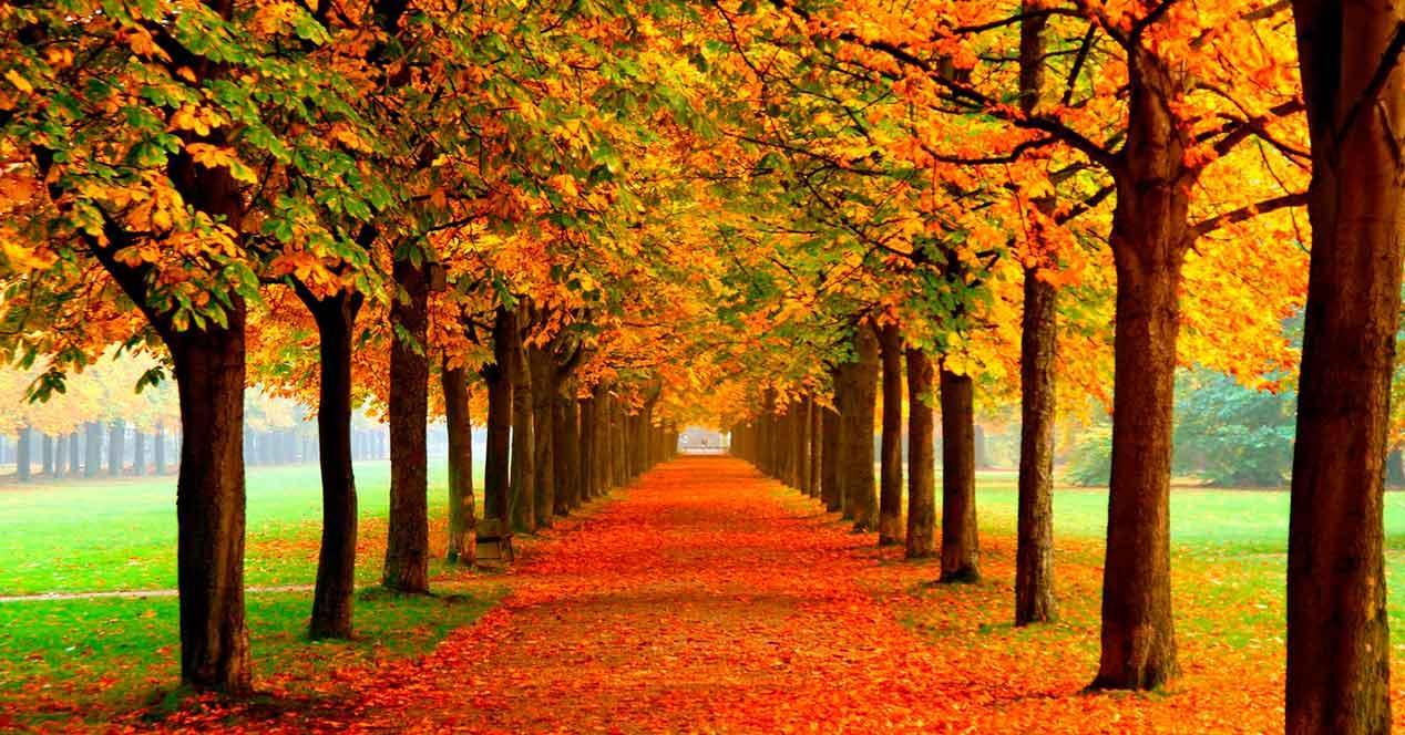 fondos de pantalla otoño