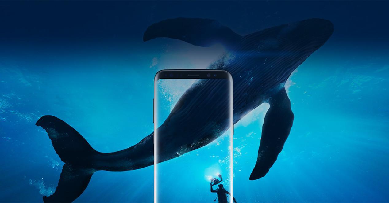 s8 ballena
