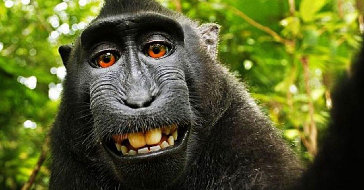 selfie mono