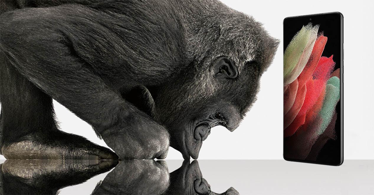 Gorila con movil